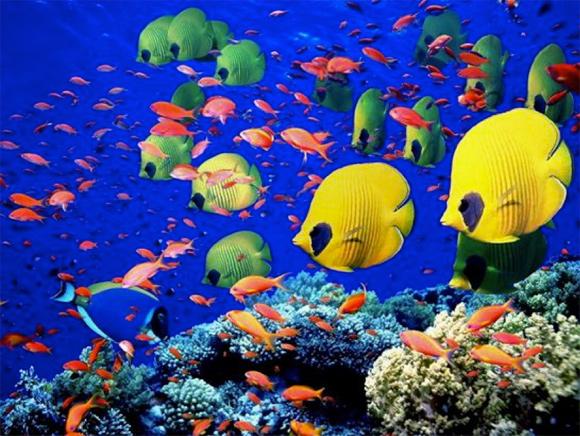 Подводный музей аквариум