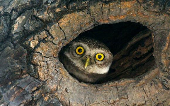 Salim_ali_birds