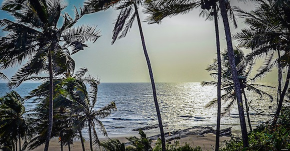 goa-beach-palms