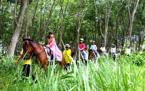 phuket-horse-riding