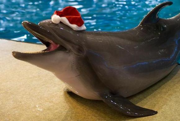 sochi_delfin